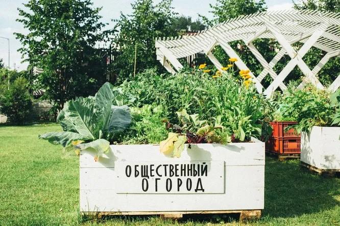 «Общественный огород» от AliExpress: что это такое?