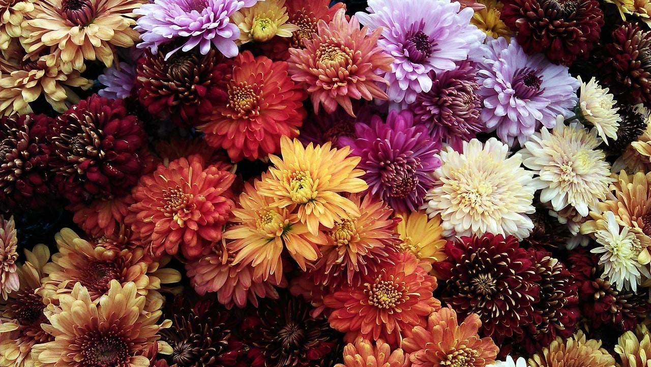 продажи живых цветов на AliExpress